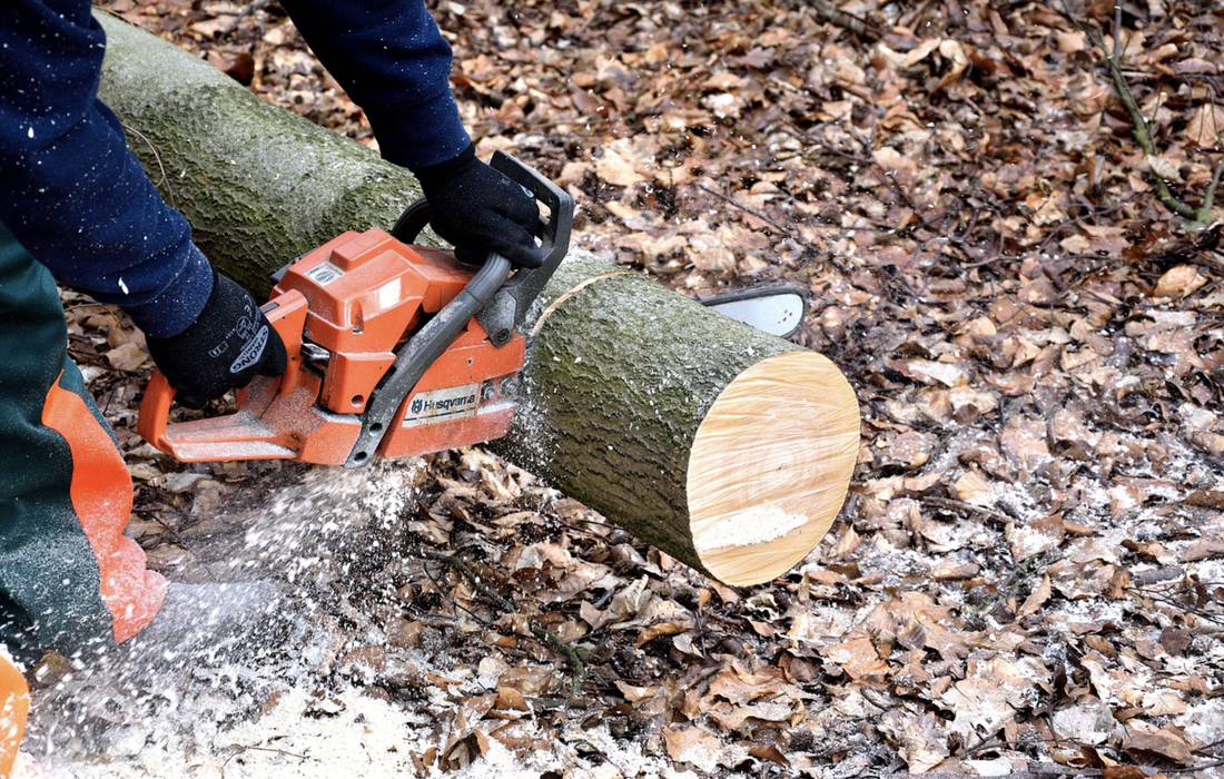 This is a picture of someone with a chainsaw, sawing through a tree stump