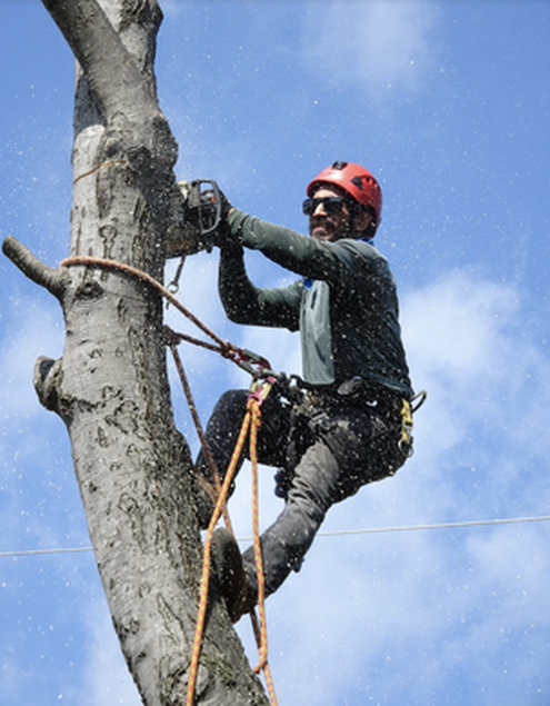 this image shows tree service elk grove